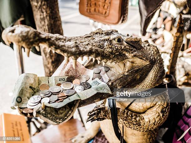 Crocodile with open mouth and money Bangkok