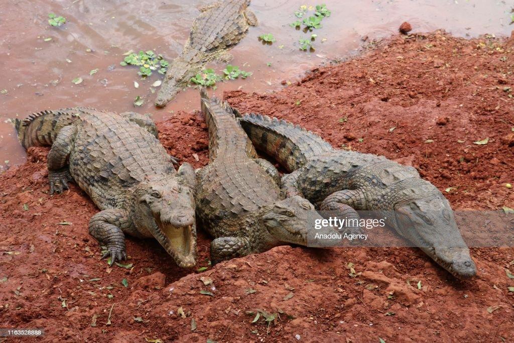 Bandia Reserve in Senegal : News Photo
