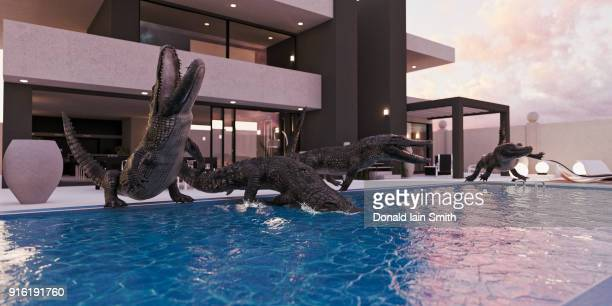 crocodiles in luxury swimming pool - luxury hotel stock pictures, royalty-free photos & images