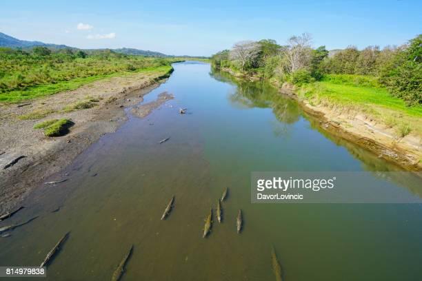 Krokodile im seichten Wasser des Flusses Tarcoles, Costa Rica