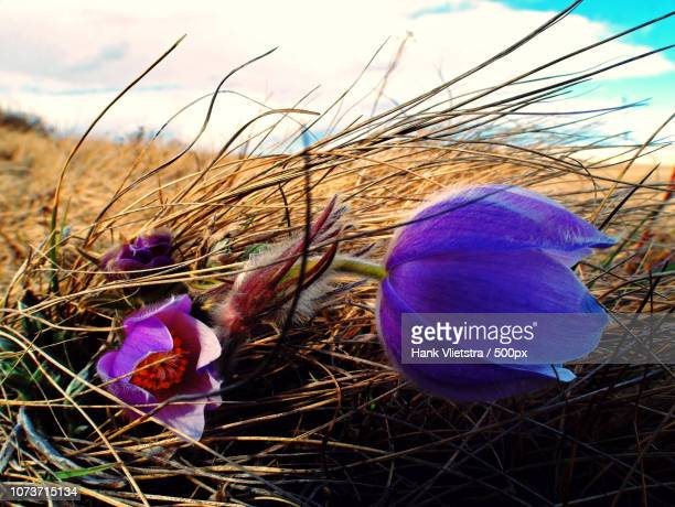 crocus microclimate - microclimate stock pictures, royalty-free photos & images