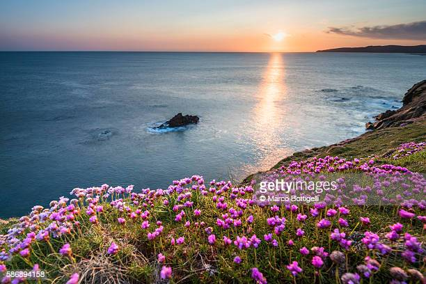 Crohy Head, County Donegal, Ulster region, Ireland, Europe. Flowers blooming on top of the cliffs at sunset.