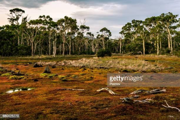 Croocked Laggon at Maria Island, Tasmania