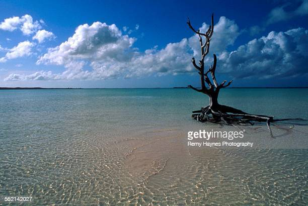 crooked tree in the water in the bahamas - harbor island bahamas stock photos and pictures
