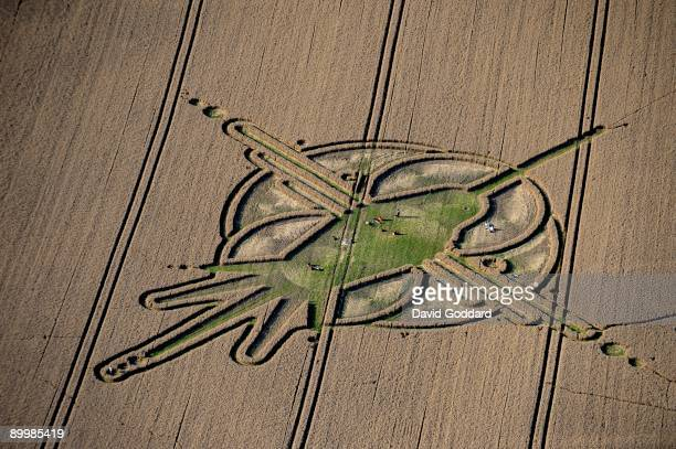 Crop circles adorn wheat fields near to Walkers Hill White Horse and North of Alton Barnes August 19 2009 the Vale of Pewsey Wiltshire England