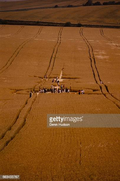 Crop circles in a field near Salisbury UK 23rd July 1990
