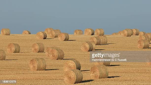 crop circles - kornkreis stock-fotos und bilder