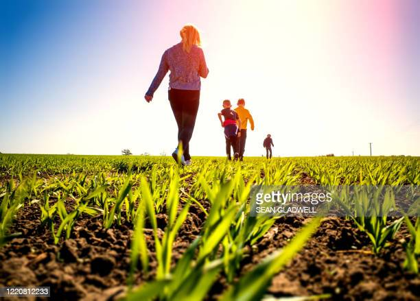 crop field walk - sunny stock pictures, royalty-free photos & images
