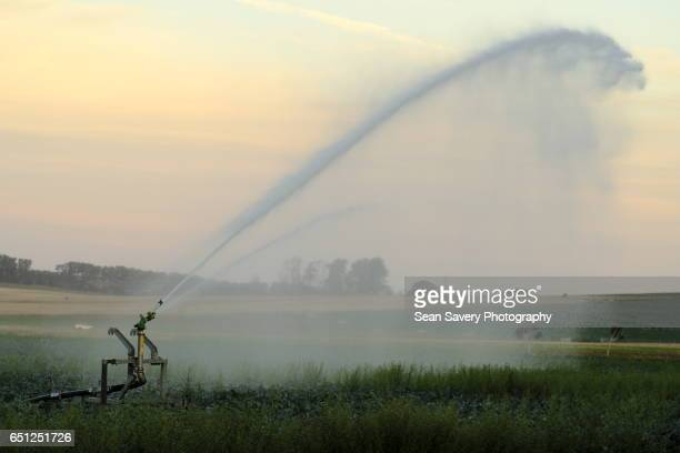 crop irrigation - sprinkler system stock pictures, royalty-free photos & images