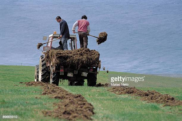 Crop of algae Cantabria Workers extend near the sea the crop of algae for their drying