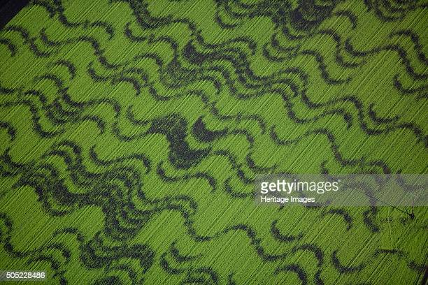 Crop patterns in fields near Ely, Cambridgeshire, 2008. Aerial view of a wavy pattern in crops. Artist: Historic England Staff Photographer.