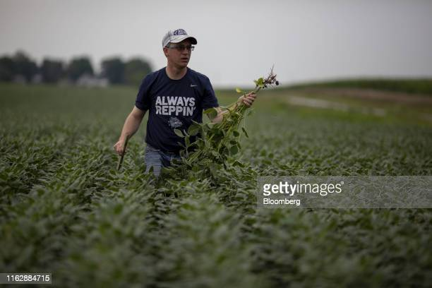 A crop scout carries soybean plants thorough a field at a stop during the Pro Farmer Midwest Crop Tour in Gilman Illinois US on Tuesday Aug 20 2019...