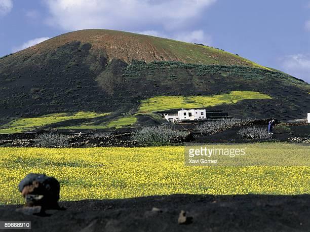 Croping in Geria, Lanzarote. Canarias