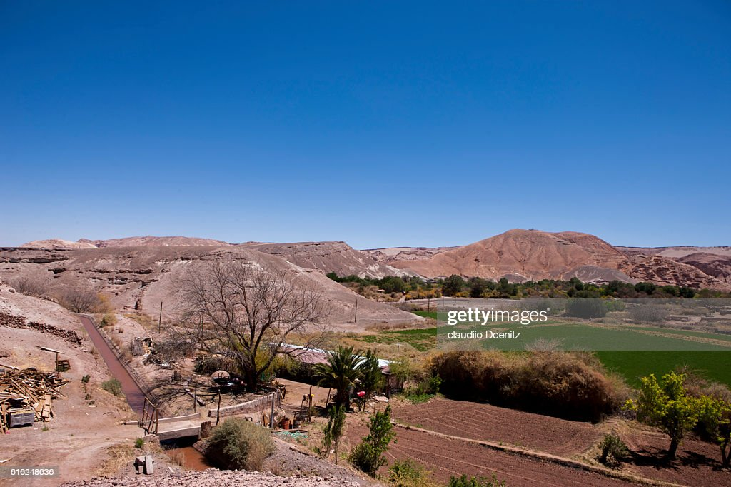 Cropland in San Pedro de Atacama : Stock Photo