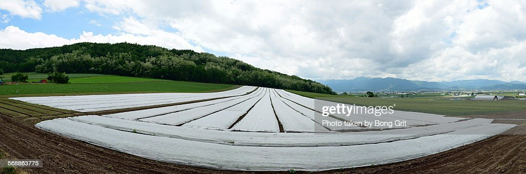 Cropland : Stock Photo