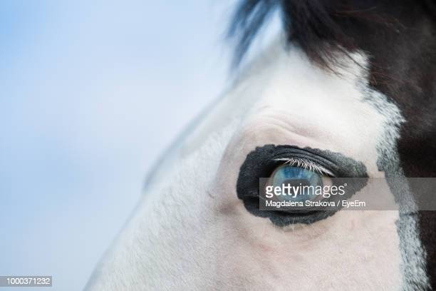cropped blue eye of horse against sky - animal eye stock pictures, royalty-free photos & images