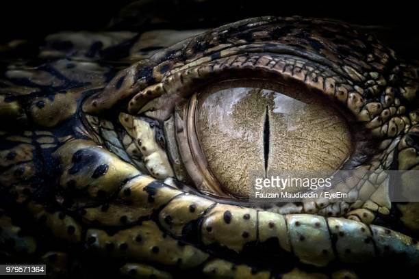 cropped eye of crocodile - crocodile stock pictures, royalty-free photos & images