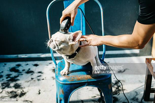 Cropped Groomer Shaving French Bulldog At Barber Shop