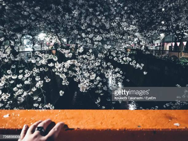 cropped hand against cherry tree over canal at night - isolated color stock pictures, royalty-free photos & images