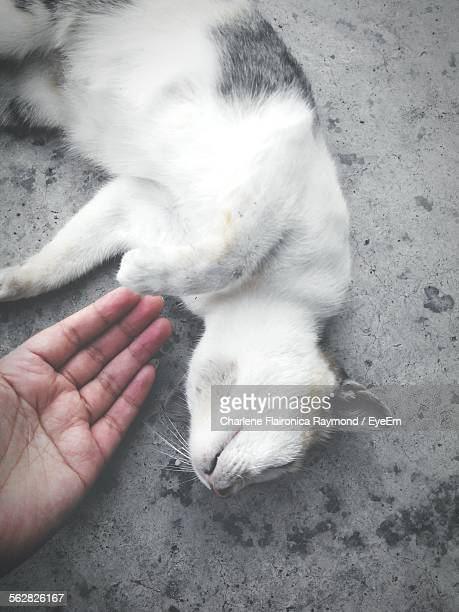 Cropped Hand By Cat On Walkway