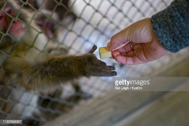 cropped hand giving food to monkey in cage - leigh grant stock pictures, royalty-free photos & images