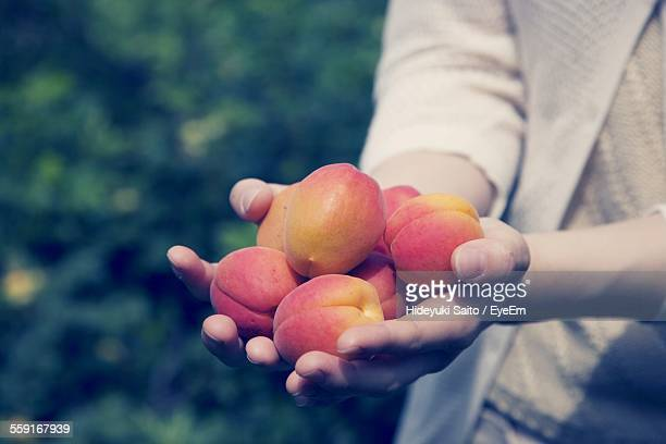 Cropped Hand Holding Apricots