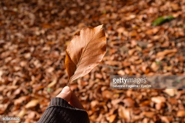 Cropped Hand Holding Autumn Leaf Outdoors