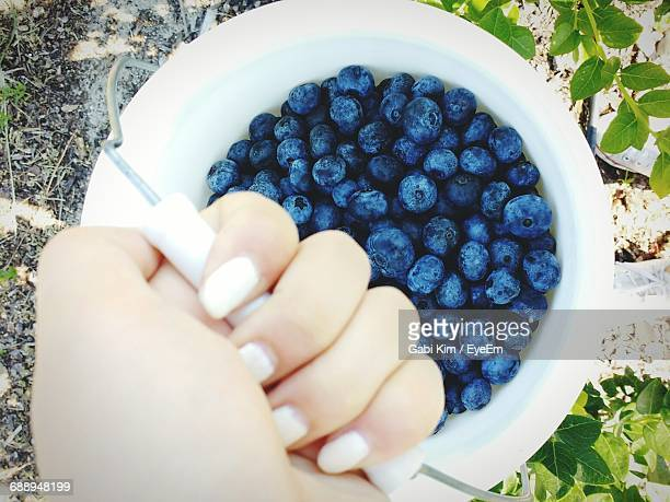 Cropped Hand Holding Blueberries Bucket