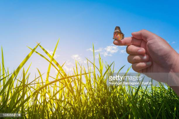 Cropped Hand Holding Butterfly Over Plants Against Sky