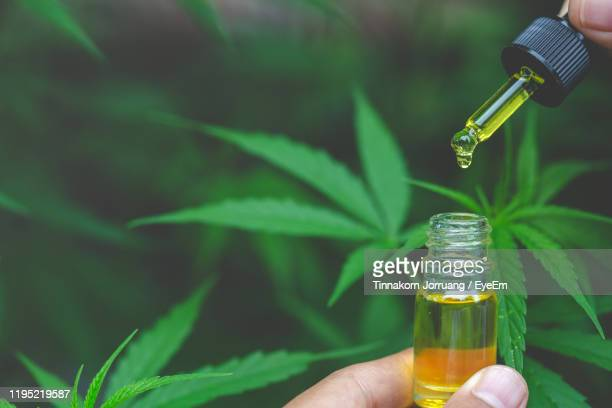 cropped hand holding cannabidiol - cbd oil stock pictures, royalty-free photos & images