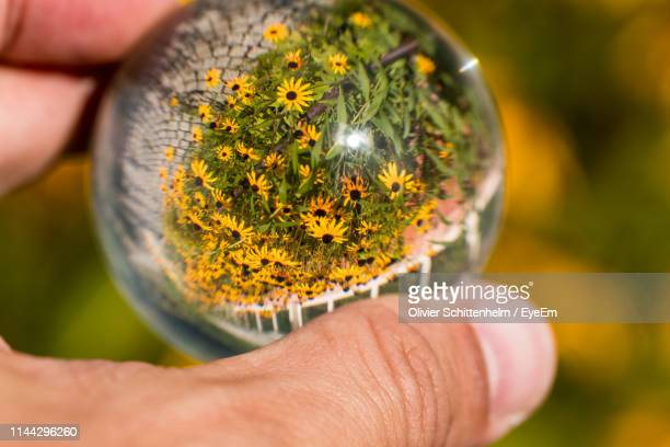 cropped hand holding crystal ball with reflection of flowers - olivier schittenhelm photos et images de collection