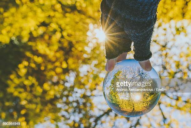Cropped Hand Holding Crystal Ball With Trees Reflection