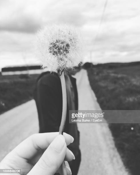 cropped hand holding dandelion against sky - leoma burke stock photos and pictures