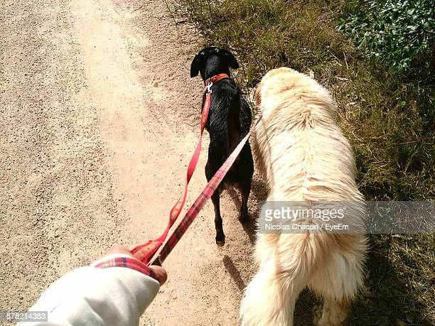 Cropped Hand Holding Dogs Leashes On Footpath