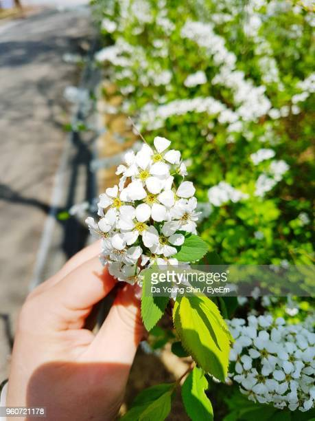 Cropped Hand Holding Flowers On Sunny Day