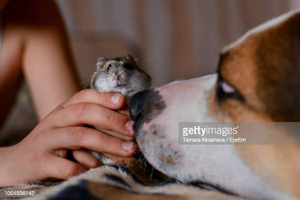cropped hand holding hamster on bed - hamster photos et images de collection