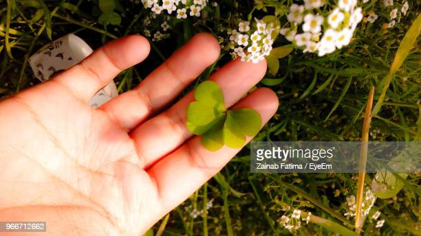 Cropped Hand Holding Leaves