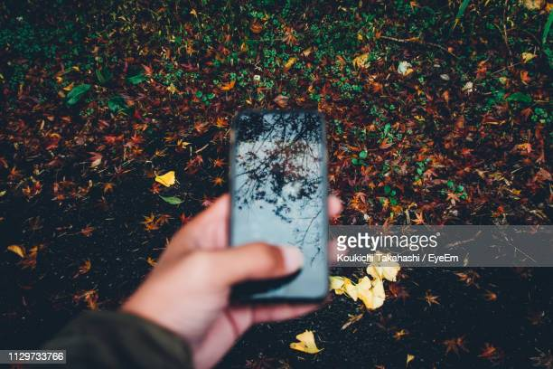 Cropped Hand Holding Mobile Phone With Reflection Of Bare Tree