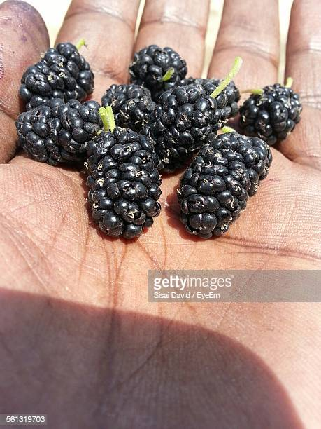 Cropped Hand Holding Mulberries