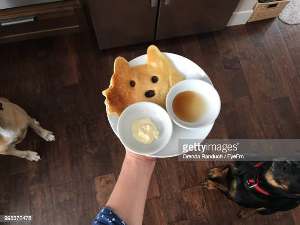 cropped hand holding pancake in plate by dogs at home - animal representation stock pictures, royalty-free photos & images