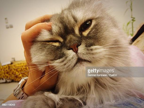 Cropped Hand Holding Persian Cat On Bed