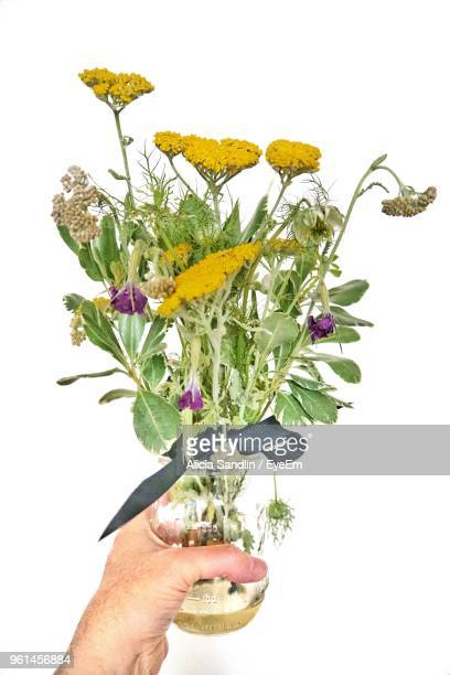 Cropped Hand Holding Plant In Jar Against White Background