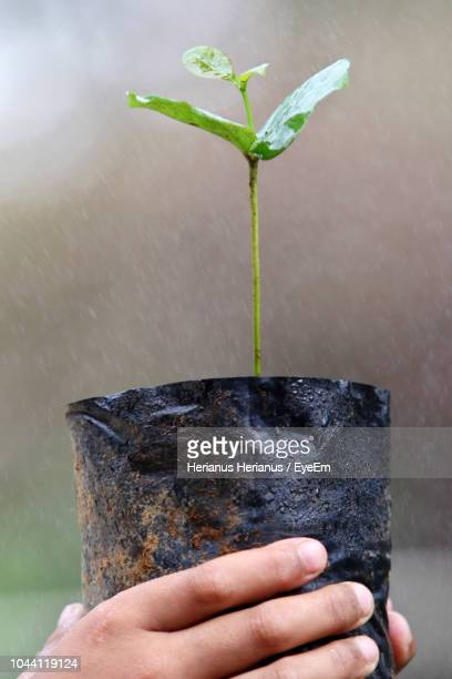 Cropped Hand Holding Potted Plant During Rainy Season