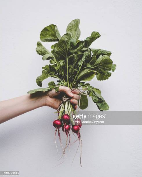 cropped hand holding radishes against white background - root vegetable stock pictures, royalty-free photos & images