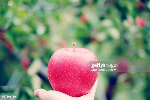 Cropped Hand Holding Red Apple