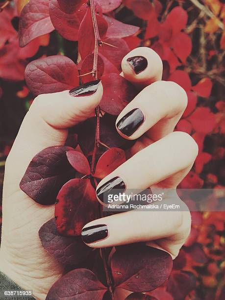 cropped hand holding red leaves - black nail polish stock photos and pictures
