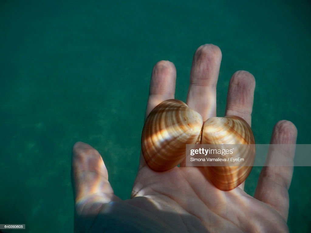 Cropped Hand Holding Shells In Water : Stock Photo