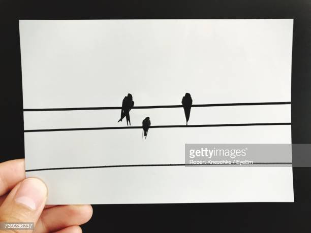 Cropped Hand Holding Silhouette Birds Photograph Against Black Background