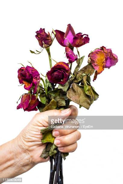 cropped hand holding wilted flower against wall - wilted plant stock pictures, royalty-free photos & images
