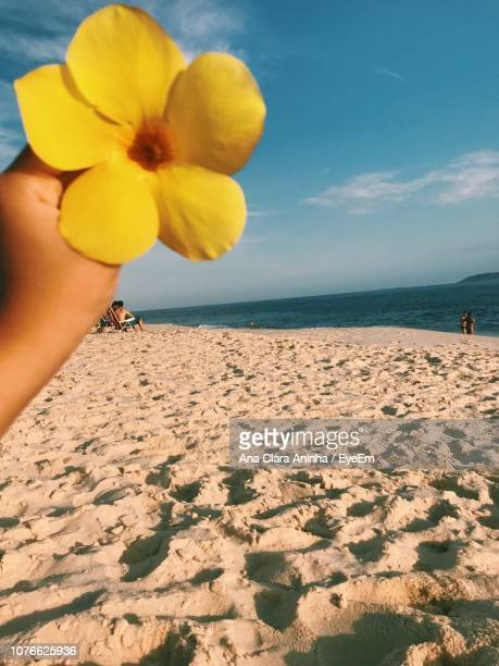 Cropped Hand Holding Yellow Flower At Beach Against Blue Sky